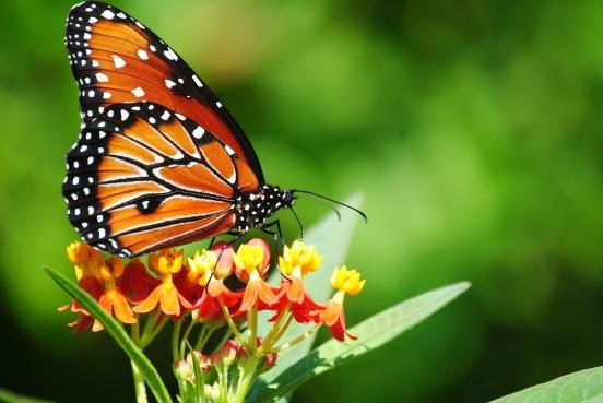 backyard butterflies, Allendale Public Schools, Allendale Community Field Day